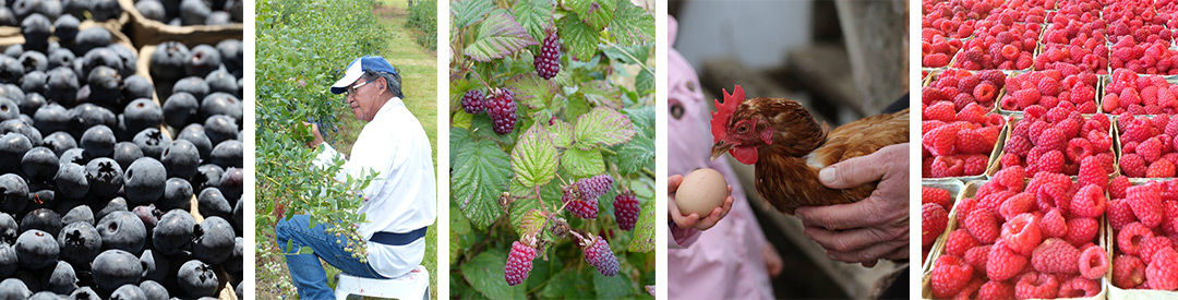 Silverside Farm - Berries, Nature, Farm Animals