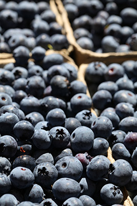 Silverside Farm Blueberries